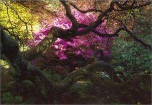 The best books on Garden Photography - A Gardener's Labyrinth by Tessa Traeger and Patrick Kinmonth
