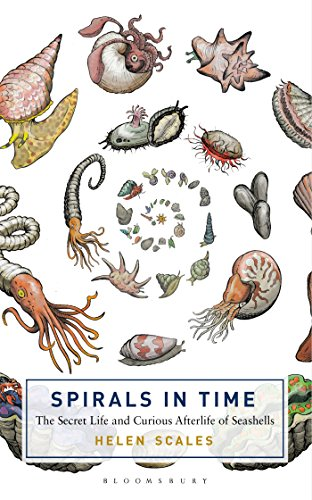 The best books on Ocean Life - Spirals in Time: The Secret Life and Curious Afterlife of Seashells by Helen Scales