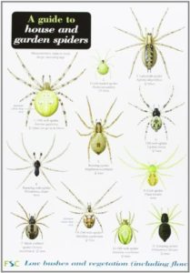 The best books on Spiders - A Guide to House and Garden Spiders by Lawrence Bee & ‎Richard Lewington (illustrator)